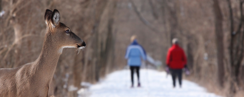 Winter Travel Series: Take a Weekend Road Trip